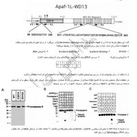 سوالات-مشابه-مرحله-اول-و-دوم.pdf
