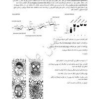 سوالات-مشابه-مرحله-اول.pdf