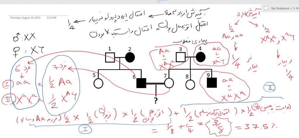راه حل مسئله دوم مرحله 2 دوره 24