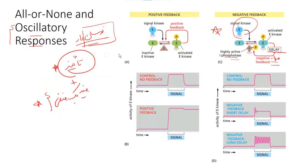 تصویری از دوره بیوشیمی المپیادلب (3)