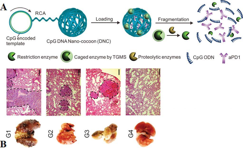 عملکرد واکسن DNA